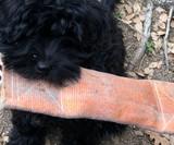 Repurposed Fire Hose Dog Toys
