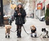 Walkee Paws Waterproof Dog Leggings