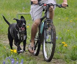 Walky Dog Hands-Free Bicycle Leash