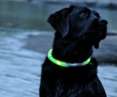 Glow-in-the-Dark Dog Collar