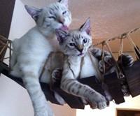 Indiana Jones Cat Bridge