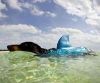 Shark Fin Dog Life Jacket