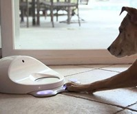 CleverPet Dog Gaming Console