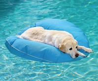 Dog Pool Float & Lounger