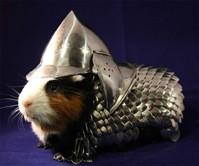 Handmade Guinea Pig Armor