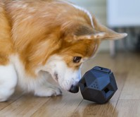 Odin Modular Puzzle Dog Toy