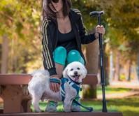 Pet Defender Stun Sticks
