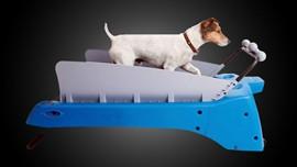 The Dog Treadmill