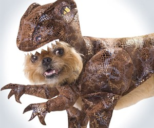 Raptor Dog Costume