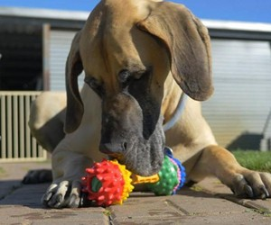 Schnuzzle - Scent-Based Dog Toys