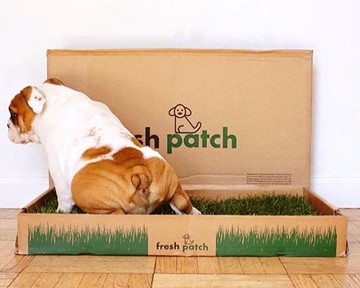 Fresh Patch - Real Grass Disposable Dog Potty