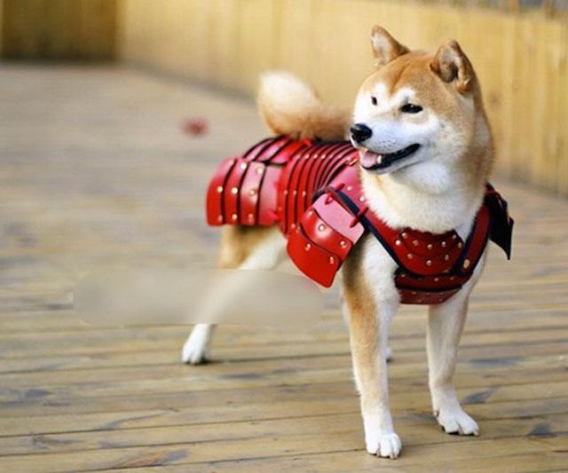 Image Result For Can Dog Saliva