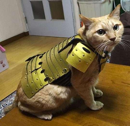 Halo Cat Food Coupon Code