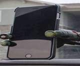 Severed Zombie Hand Phone Mount