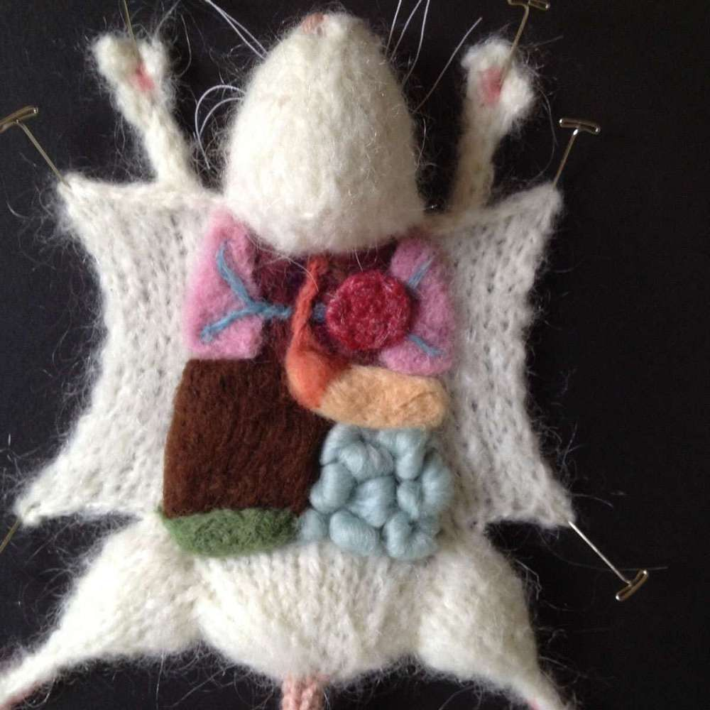 knitted dissections