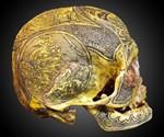 Real Human Skull Art