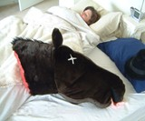 Horse Head Pillow
