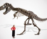 Life Size T-Rex Skeleton