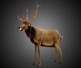 Life-Size Animated Talking Reindeer