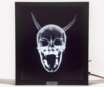 X-Ray Lightbox -  Corporate Evolution