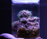 Desktop Saltwater Aquarium