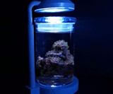 Desktop Saltwater Aquarium