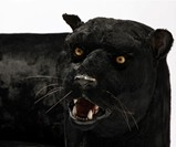 Panther Sofa by Rodolfo Rocchetti - Closeup