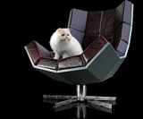 Villain Chair with Cat