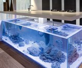 Ocean Kitchen - Aquarium Island