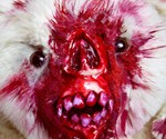 Undead Teds - Your Bear, Zombified