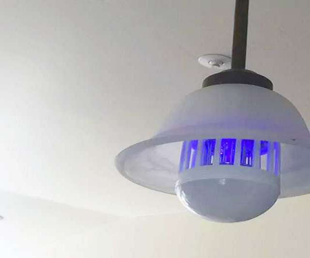 zapplight bulb bug zapper. Black Bedroom Furniture Sets. Home Design Ideas