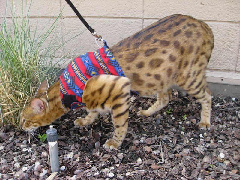 Cat House Training Lapses