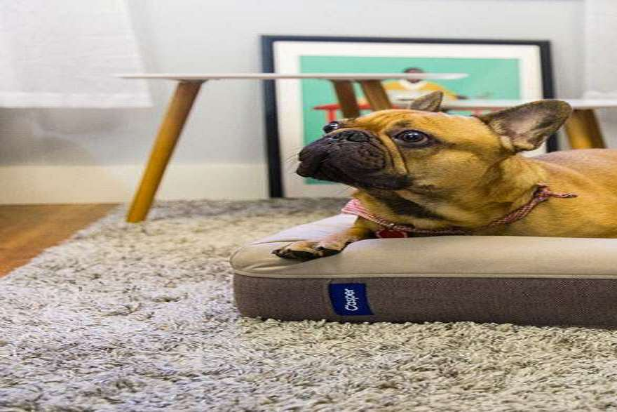 Mattress Style Dog Beds