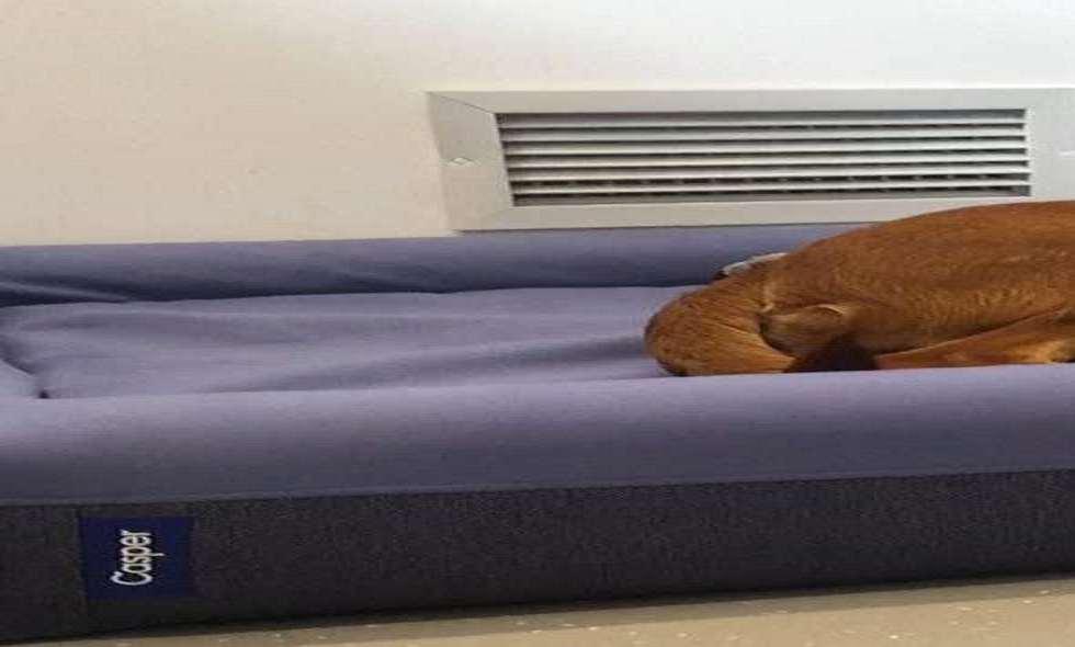 Casper Dog Bed Review