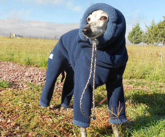 Dog Snowsuit