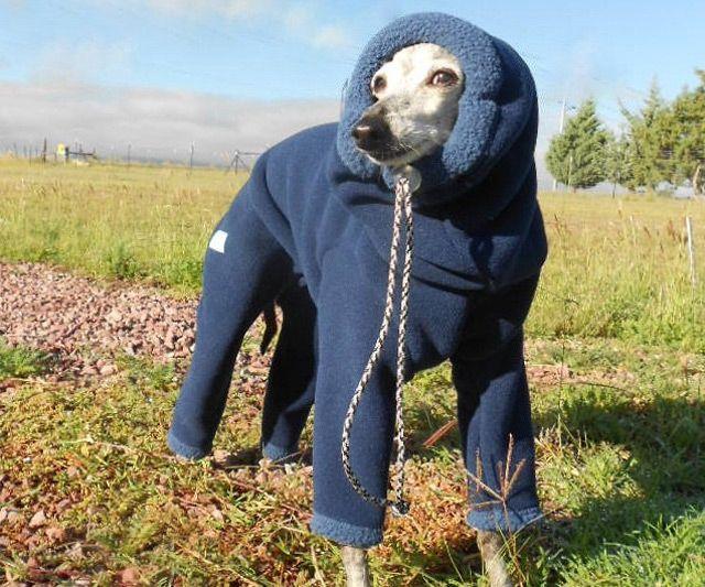 dog snowsuit dudeiwantthat