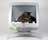Apple Computer Pet Bed