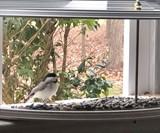BestNest Clearview Window Bird Feeder