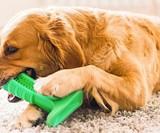 Bristly Dog Toothbrush
