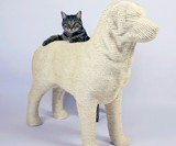 Dog Cat Scratching Post