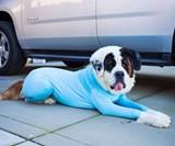 Shed Defender Dog Onesie