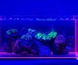 Voodoo Tanks - Aquariums with Glowing Edges