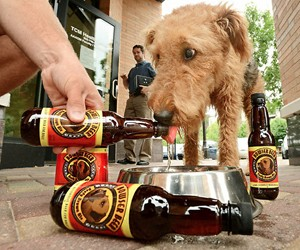 Bowser Beer for Dogs