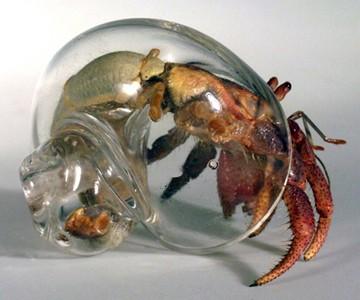 Blown Glass Hermit Crab Shells