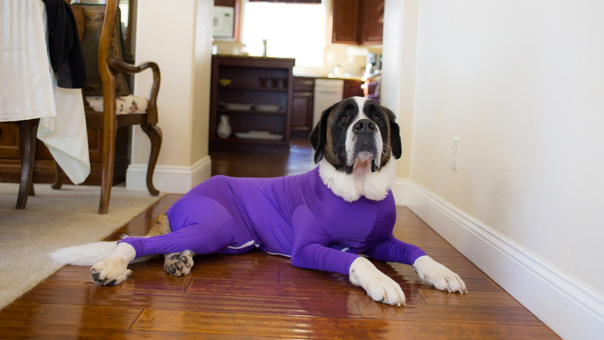 Shed Defender Dog Onesie