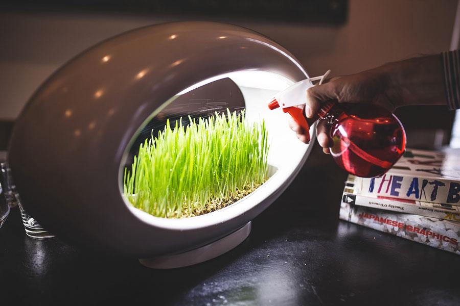 Grasslamp Modern Desktop Garden   DudeIWantThat.com