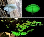Glow-in-the-Dark Mushroom Garden - Closeup & Panorama