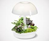 Ambienta Living Table Lamp