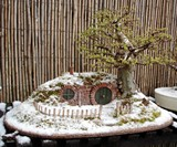 Bilbo Baggins Bonsai Home