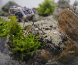 Breaking Bad Terrarium